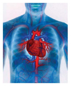 Cardiovascular Disease. Lifestyle or Genetics?